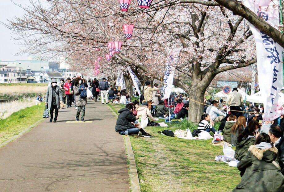 桜を楽しむ来場者(鴨居連合自治会提供、写真は2019年)