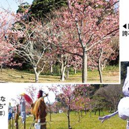 暖かさに誘われて観音崎公園で桜咲く