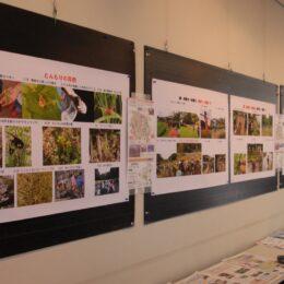 川崎市宮前区・飛森谷戸(とんもりやと)の自然を守るボランティア活動写真展【多摩区・二ヶ領せせらぎ館】