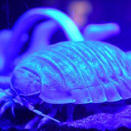 深海生物50種500点以上「深海生物まつり」開催中@横浜・八景島シーパラダイス