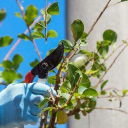 【参加者募集】樹木の特徴、管理方法を学ぶ 《 鎌倉市公園サポーター養成講座「剪定」》3月15日必着