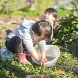 三浦で「親子農業体験教室」募集!苗植えから収穫までを体験しよう!!