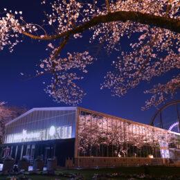 【春限定ver.】「HANA・BIYORI」デジタルアートショー 桜ライティングと1周年記念イベント開催中!