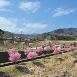 秦野でお散歩!季節の花など1年通じてぶらり散策スポットをご紹介