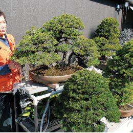 小さな盆栽展〜貴重盆栽の展示も〜横浜市鶴見区「りびんぐしょっぷ木曽屋」