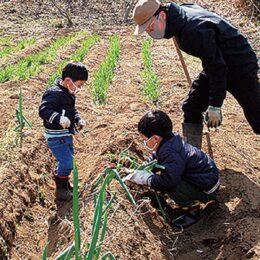 【要予約】春の収穫祭 「梅あ~と祭」 開催中@舞岡ふるさと村「かねこふぁ〜む」