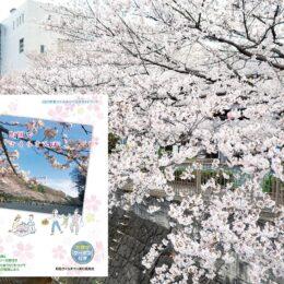 町田市内の桜スポットをガイドブックで紹介【町田市役所などで配布中】