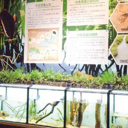 新展示コーナー「水生昆虫水槽」が完成@相模川ふれあい科学館【相模原市中央区】
