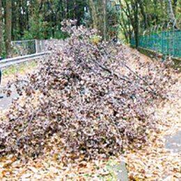 相模原市内で深刻化「ナラ枯れ」千本超が2020年度に被害 落枝に注意!伐採急務