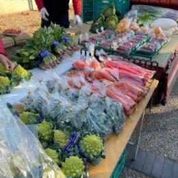 生産者に会える、旬の農作物が見つかる!「茅ヶ崎海辺の朝市」毎週土曜開催中