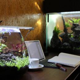 まるで水族館…Wi-Fi完備!秦野市にグッピーカフェがオープン 癒しのアクアビュー空間でテレワークも