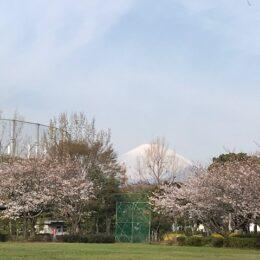 花と緑に囲まれた憩いの場 上府中(かみふなか)公園からの桜と富士山は絶景