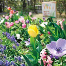 ミックス花壇が開花 !横浜市鶴見区の「江ヶ崎町公園」鮮やかに春彩る