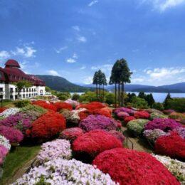 箱根・山のホテルで「つつじ・しゃくなげフェア2021」開催!「園芸文化遺産」と言われる庭園を公開!