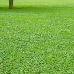 横浜・金沢区で「ターゲット・バードゴルフ大会」4月20日から参加申し込み開始