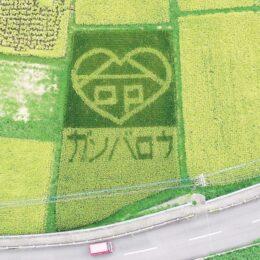 参加者募集「農作物収穫体験・米コース」田んぼアートも!@中井町<6月~11月>