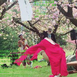 2021年「桜ばたけ祭り」4月24日(土)秦野市堀西の桜畑で開催
