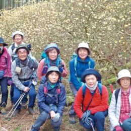 【新規会員募集】楽しく安全山歩きーハイキングクラブ「山ぼうし」@町田市