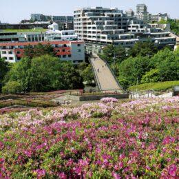 【横浜市都筑区】つつじ、色鮮やかに 横浜国際プール近く