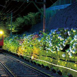 【箱根登山鉄道】2年ぶりに、あじさいの夜間ライトアップを実施!〈6月19日(土)から〉