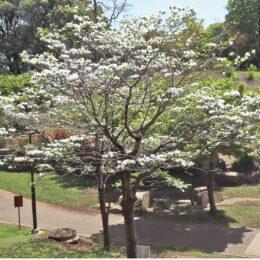 【横浜市港北区】緑いっぱい、憩いの場 @岸根公園