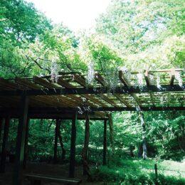 【横浜市】里山の自然、味わう 緑区・四季の森公園