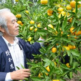 【海老名市の農家直売所】新鮮果物は「鈴木農園」へ!柑橘は完全無農薬のこだわり<直売マルシェも>