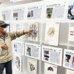 「海藻物語」コラムニスト博士・高橋さんが標本を展示@逗子市 5月16日にはお話し会も開催