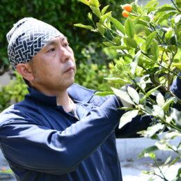 植木の管理を任せてみたい! 樹木の専門家「樹木医」の資格を持つ植木職人