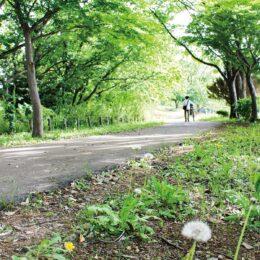 新緑の季節に散歩はいかが?多摩よこやまの道【唐木田駅から徒歩約10分】