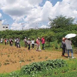【参加者募集】川崎市宮前区で「農家巡りウォーキング」農家さんの話を聞きながら魅力を再発見!