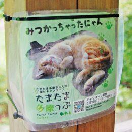 「猫の多摩ちゃん」探して写真をツイッターに投稿しよう!抽選でプレゼントも<川崎市多摩区>