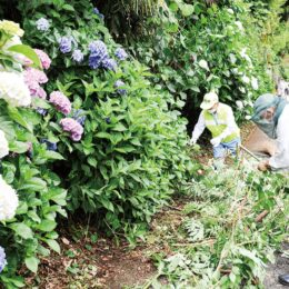 川崎市・妙楽寺「あじさいまつり」【6月20日】2021年は規模抑え、静かに開催へ