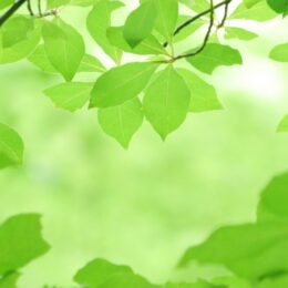 【事前申込不要】初夏の和泉川を散策@瀬谷水緑の健康ウォークサポーター会