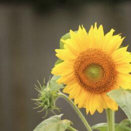 子育てママ花で癒しの講座 6月29日、横浜市西区・藤棚地域ケアプラザ