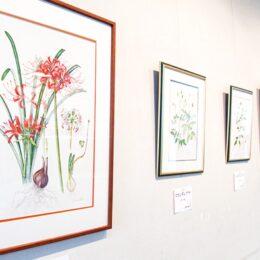 【6月30日まで】ヒガンバナなどを精密に描く「植物画展」@川崎市・二ヶ領せせらぎ館