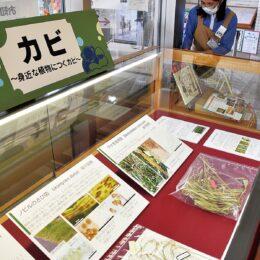 南足柄市立図書館で企画展「カビ~身近な植物につくカビ~」開催中!知られざるカビの魅力を紹介