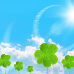 【横浜市】8月1日「こども森の日 夏まつり」藍染め体験や竹細工も@新治市民の森