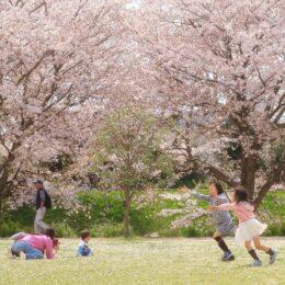 作品募集「第13回花とみどりのフォトコンテスト」開催! カメラとスマホの2部門で9月2日まで