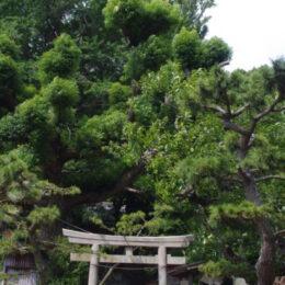三浦市の「小網代の森」2021年7月5日(月)からしばらくの間大雨被害で全面閉鎖