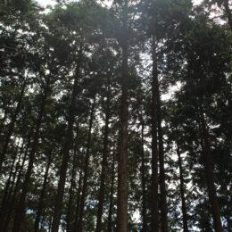 【取材レポ】里地・里山の風景を次世代へ!秦野市の里地里山を育む会の活動をレポート