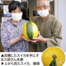 本当にスイカ!? 三田さんの菜園で収穫@厚木市