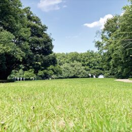 古代芝生広場の芝張替え完了!ケヤキ広場は2022年春まで育成中!@川崎市・東高根森林公園