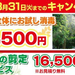 プロの技 夏場の害虫に要注意 消毒や剪定は今のうちに!ダスキンあざみ野支店(横浜市)