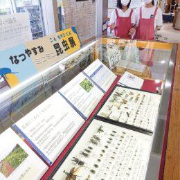 夏休みの自由研究にいかが?南足柄市立図書館で「夏休みミニミニ昆虫展」開催中!