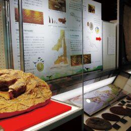 入場無料「足跡化石から探る太古の世界ー恐竜からナウマンゾウまでー」横須賀自然・人文博物館