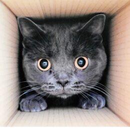 猫愛溢れる作品を募集!写真展 1人3点まで【横浜市中区・大佛次郎記念館 】