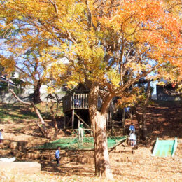 平戸幼稚園(横浜市戸塚区)やまのある幼稚園。子ども主体のあそび中心の保育です【2022年度募集】