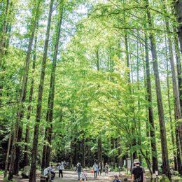 <写真募集> 川崎市・生田緑地80周年!「未来へ残したい」一枚募る!優秀作品は展示も