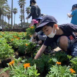 〈茅ヶ崎市立松浪小学校〉笑顔のお花いっぱいプロジェクト!地域と関わりSDGs学ぶ